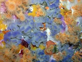 sea sponges (Porquerolles)
